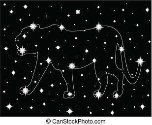 star in the night sky