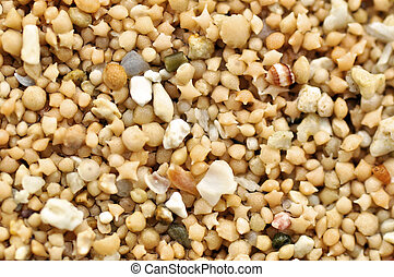 Star shaped sand can only be found in two beaches in the world. It is actually the shell of a microscopic animals.