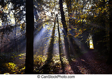 star sunbeams in forest
