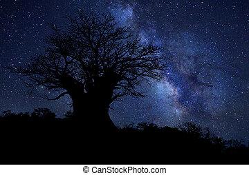 Star Trails Milk Way in South Africa Night Sky