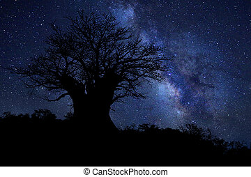 Star Trails Milk Way in South Africa Night Sky - Night Sky...