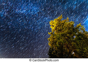 Star Trails over a pine tree at the Troodos mountains. in Kakopetria village