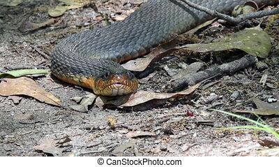Stare Down with Snake - Stare Down with snake on a hiking...