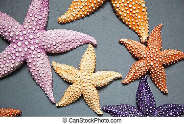 Starfish - A set of colourfull ornamental starfish (or sea...