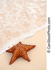 Starfish and ocean wave