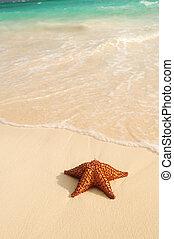 Starfish and ocean wave on sandy tropical beach