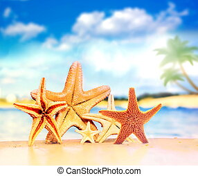 Starfish and palm on the sandy beach