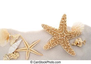 Seashell border. Seashells and starfish background border ...