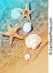 Starfish and seashell on the summer beach in sea water. Summer background.