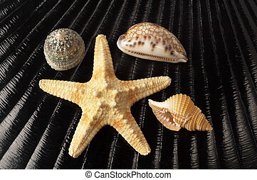 Starfish and seashells - Starfish and three seashells over...
