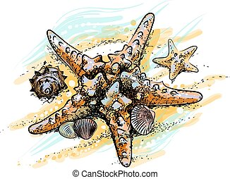 Starfish and shells on a summer beach in the sand