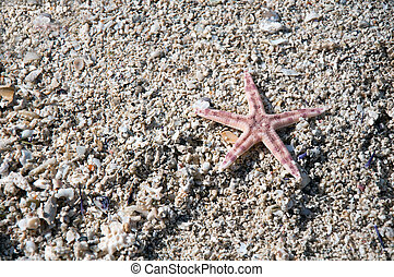 Starfish and shells on the tropical beach