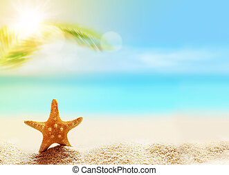 starfish on the sandy beach and palm