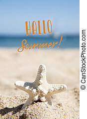 starfish and text hello summer in german