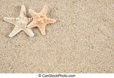 starfish, arealet, -, sand, kopi, strand