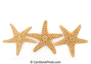 Starfish Background - Three starfish isolated on a white...
