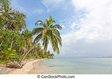 Starfish beach, Bocas del Toro, Pan