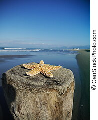 starfish beach vacation
