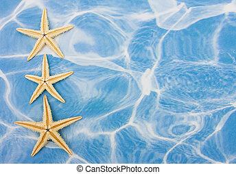 Starfish Border - Starfish sitting on blue water background...