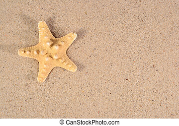 Starfish close-up in a sand