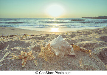 starfish, e, sgusciare, spiaggia