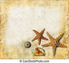 starfish, e, sgusciare, su, uno, grunger, fondo
