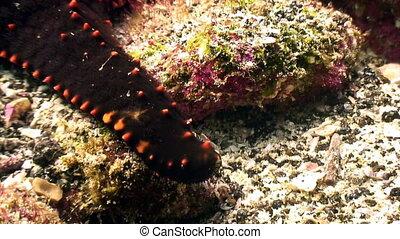 Starfish five-finger underwater lagoon of ocean on...