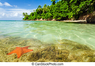 Starfish in Clear Water - A starfish in crystal clear water...