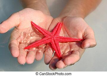 Starfish in hands