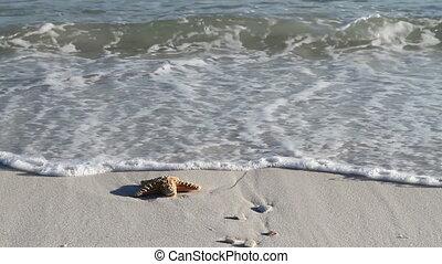 Starfish In Surf