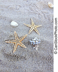 starfish in the beach sand
