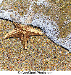 Starfish in the foam of the surf on the shore