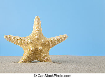 starfish in the sand for relaxation on a blue background