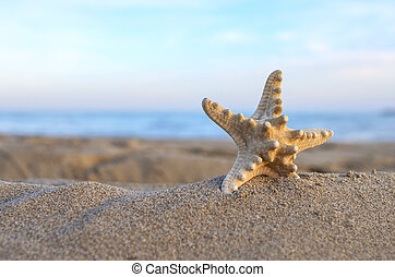 Starfish in the sand on the beach.