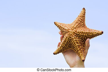 Starfish in the sky