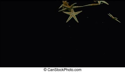Starfish in the water in slow motion
