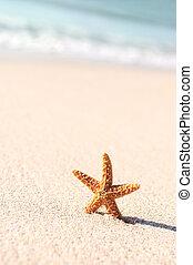 starfish, in, vacanze