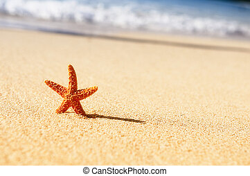 starfish in vacations - Summer vacations - starfish on ...