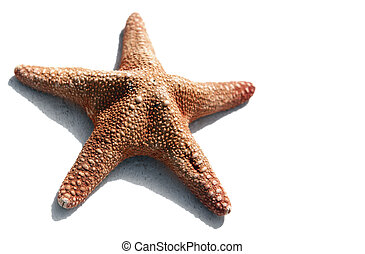 Starfish Isolated - High contrast starfish on white with...