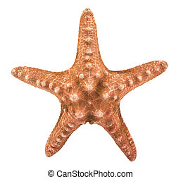 Starfish isolated on white background with clipping path