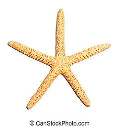 Starfish isolated on white