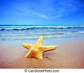 starfish, ligado, um, praia