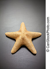 starfish on a black wooden background