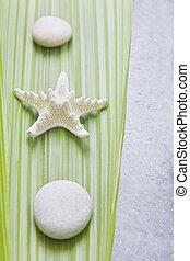 Starfish on a palm leaf