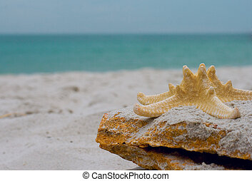 starfish on a stone