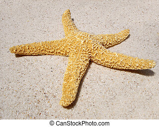 Starfish on Beach - A starfish on the beach in the sun....