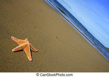 Starfish on Beach - Starfish on empty beach