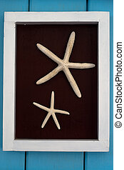 Starfish on brown background in white Wood frame