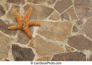 Starfish on stone floor