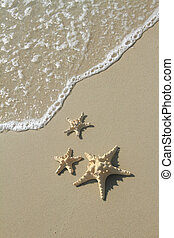Starfish on the beach at summer